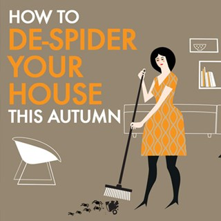 How To De-Spider your House This Autum