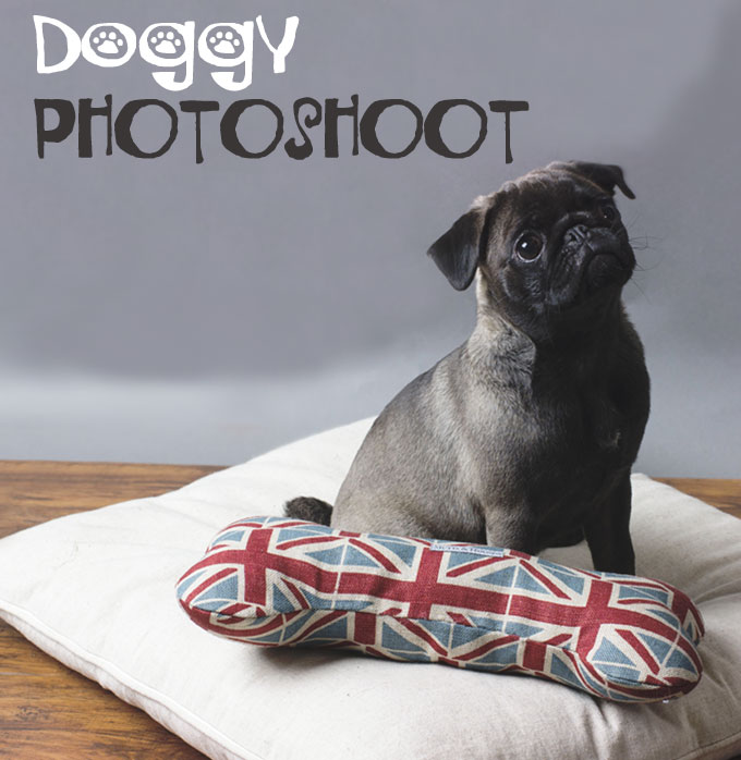 See What Happened At Our Dog Photoshoot!