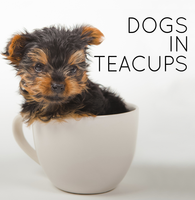 Dogs in Teacups