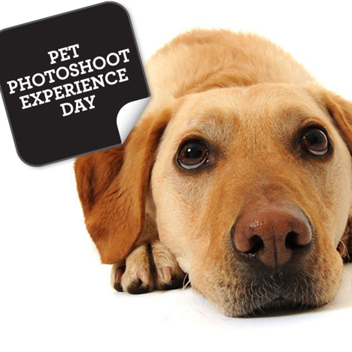 Pet Photoshoot Experience Day